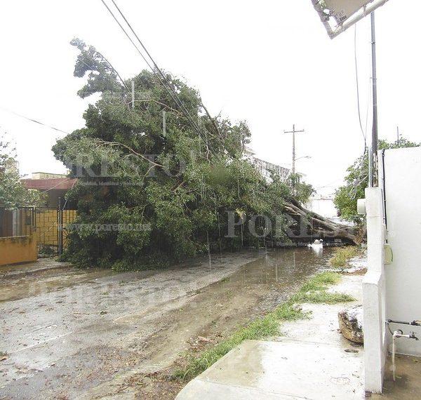 """YUCATÁN : """"Norte"""" causa estragos en la ciudad"""